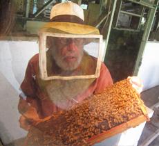 「【幻の白いハチミツ】レアハワイアンオーガニックホワイトハニー<プレーン> 8oz(株式会社NALU GARDEN FARM)」の商品画像の3枚目