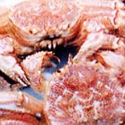 厚岸産浜茹で毛ガニ 特大1匹の商品画像