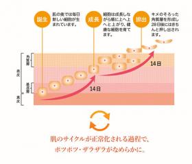 「アプリアージュオイルS(AiB株式会社)」の商品画像の4枚目