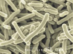 「(2020年9月新発売)リセット型生菌サプリ マイビオ<10回分>(株式会社メタボリック)」の商品画像の2枚目
