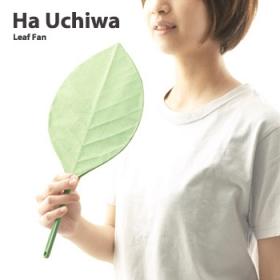 「葉うちわ(アッシュコンセプト)」の商品画像