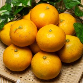 温州みかん 3kg 有機JAS無農薬(佐賀県 佐藤農場)の商品画像
