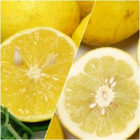 自然農法無農薬『黄蜜柑・サワーポメロセット』(鹿児島県 かんとりぃぱぁく)の商品画像