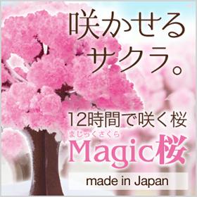 マジック桜の商品画像
