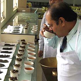 「高級インド紅茶プリミアスティー(Premier's Tea)(ブランド洋食器専門店 ル・ノーブル(Le-noble))」の商品画像の3枚目