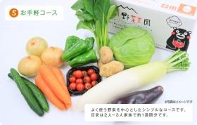 安心・安全な新鮮野菜10品目の商品画像